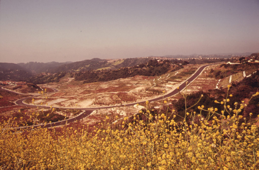 Field of flowers along new road and lots on Mulholland Drive